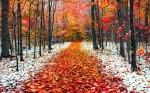 Новости из детского сада «Золотой петушок». Ноябрь. Поздняя осень.