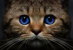 «Кошки знают все!»