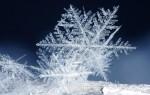Новости из детского сада «Золотой петушок». Снежинка – чудо природы.
