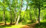 День природы