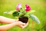 Новости из детского сада «Золотой петушок».  Акция «Посади цветок – подари радость».